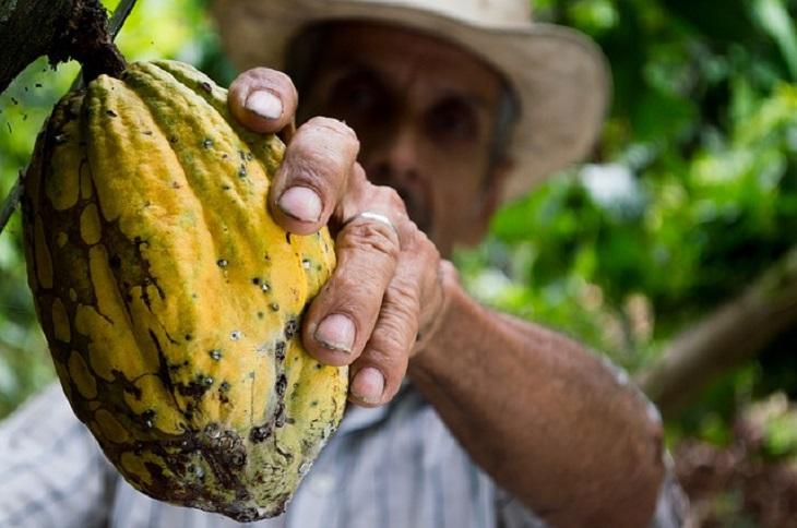La vicepresidenta del Senado solicitó asignar mayor presupuesto federal al programa de cacao en Tabasco